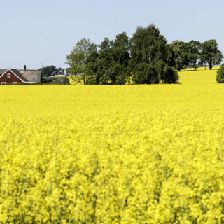 Rapeseed Fields, Bicycles and Rhubarb Crumble