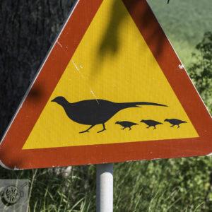 Pheasant crossing sign.