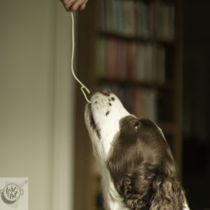 Clo girl (dog) eating pasta.