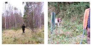 Hunting in Österlen, Sweden.